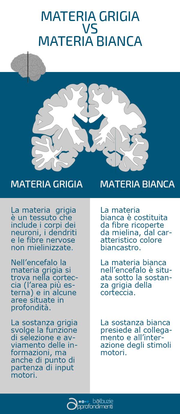 Materia grigia e materia bianca - Vivavoce Institute