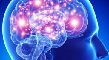 Neuroplasticità Vivavoce Focus