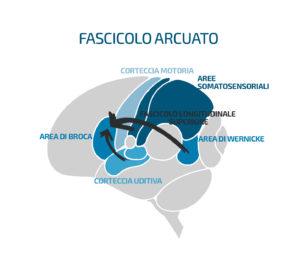 Fascicolo arcuato - Vivavoce Institute
