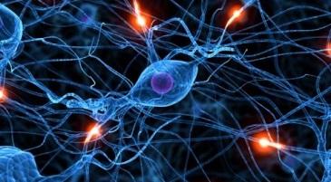 Sistema Nervoso Centrale: dal neurone al neurotrasmettitore- Sistema Nervoso Centrale: dal neurone al neurotrasmettitoreivavoce Focus