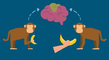 Neuroni specchio e motor imagery: una scimmia afferra una banana, un'altra vede un uomo afferrare la banana. L'area del cervello attivata è la stessa.